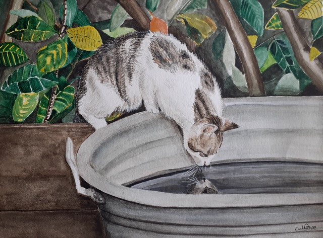 Kitten cooling off