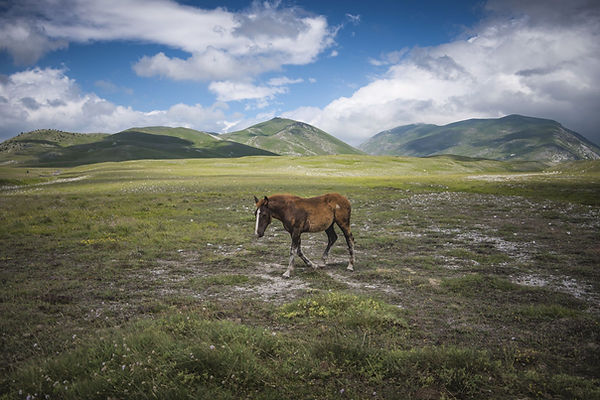A.Passerini_Little Tibet (6)_e.jpg
