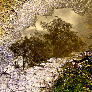 Puddle Trees is an inverted reflection of part of a small, asphalt-surrounded mud puddle, located at my feet. It shows trees reflected in it. The dramatic lighting stems from the extremely bright sunlight reflected by the asphalt.  Location: A footpath at the bottom of the Moostal (Moss Valley), a rural farm and pasture area in the Village of Riehen, BS Switzerland.