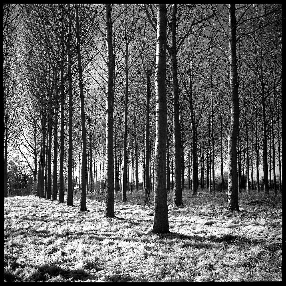 Trees, Beccles, Suffolk Photography by Paul Cooklin