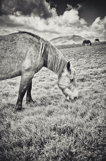 A.Passerini_Little Tibet (4)_e.jpg