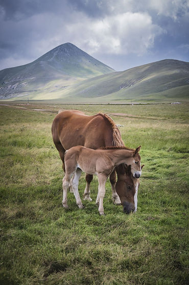 A.Passerini_Little Tibet (8)_e.jpg