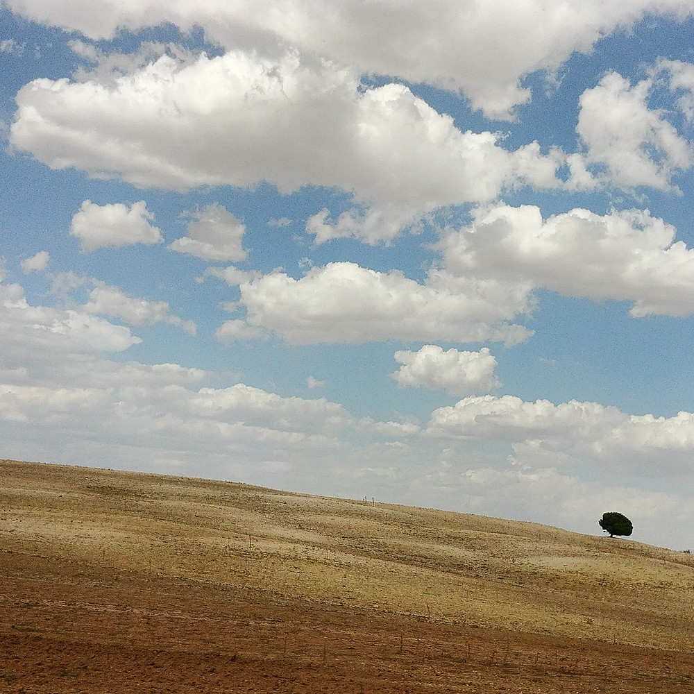 "The last Tree.""A tree besieged by a desert landscape is the last hope of life on earth."""