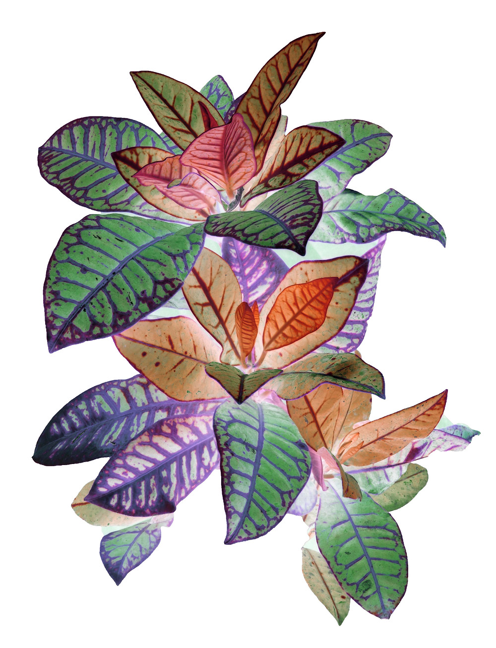 Heavenly plants  Heavenly plants is a photographic series inspired from the botanical beauty. The images have been digitally manipulated to achieve the vibrancy and vividness of colours of nature the artist perceives it to be