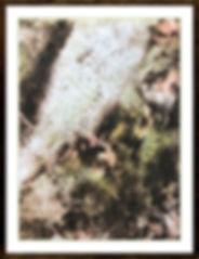 Furbush Grove.jpg