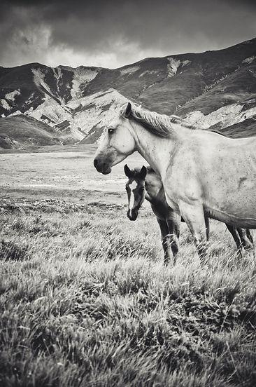 A.Passerini_Little Tibet (2)_e.jpg