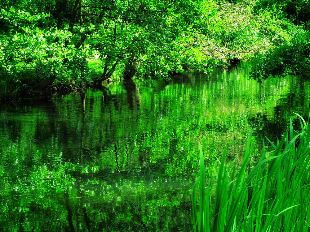 Green , spring , reflections, The greens are so lush and fresh in spring time. The picture was taken in the Netherlands