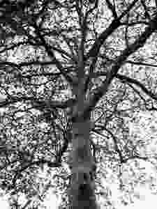 Tree The features on the trunk and the way the branches suggested movement are what attracted me to this as a subject. It seemed to be talking to me and begging for some sort of attention.