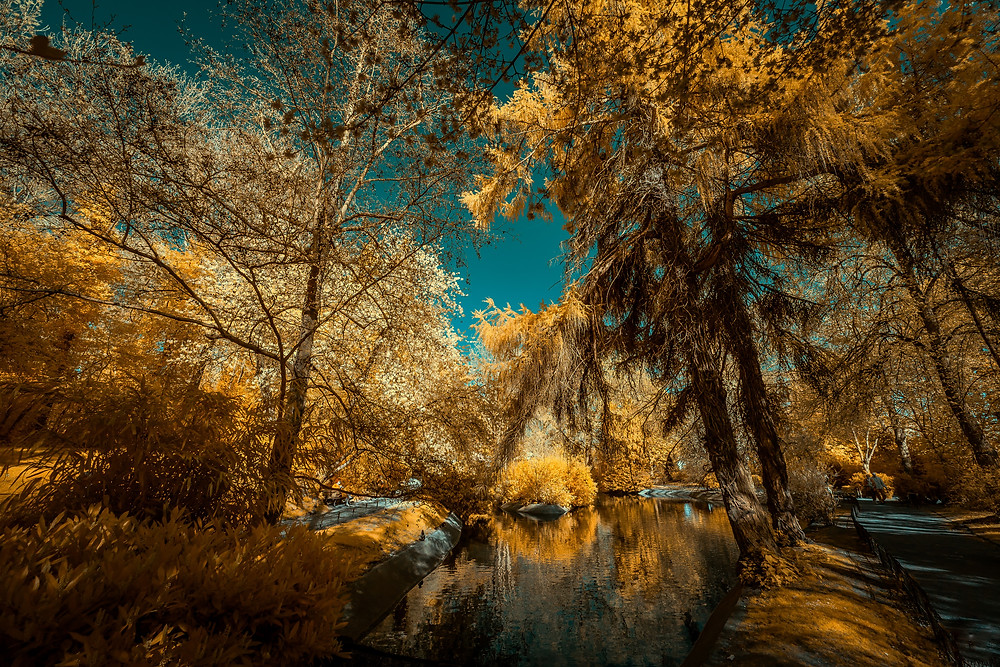 Public Jungle  Take a public garden (in Cambrai, France) with a small lake and try to turn it into a urban goldy jungle. Mystical and adventurous !  Shot with IR590nm Modified EOS 5D MKII - Ef 17-40 mm f/4