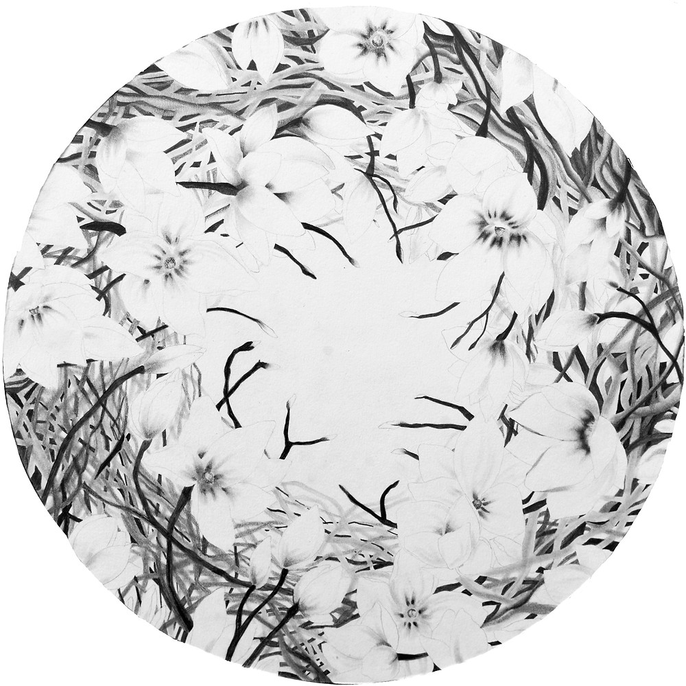 """""""Magic Circle"""" is a series of work which focus on the ancient medieval tradition of circles rituality, often used to provide magical protection.  My drawings act with the same purpose.  A circle made of plants with the intent to shield from adverse forces."""