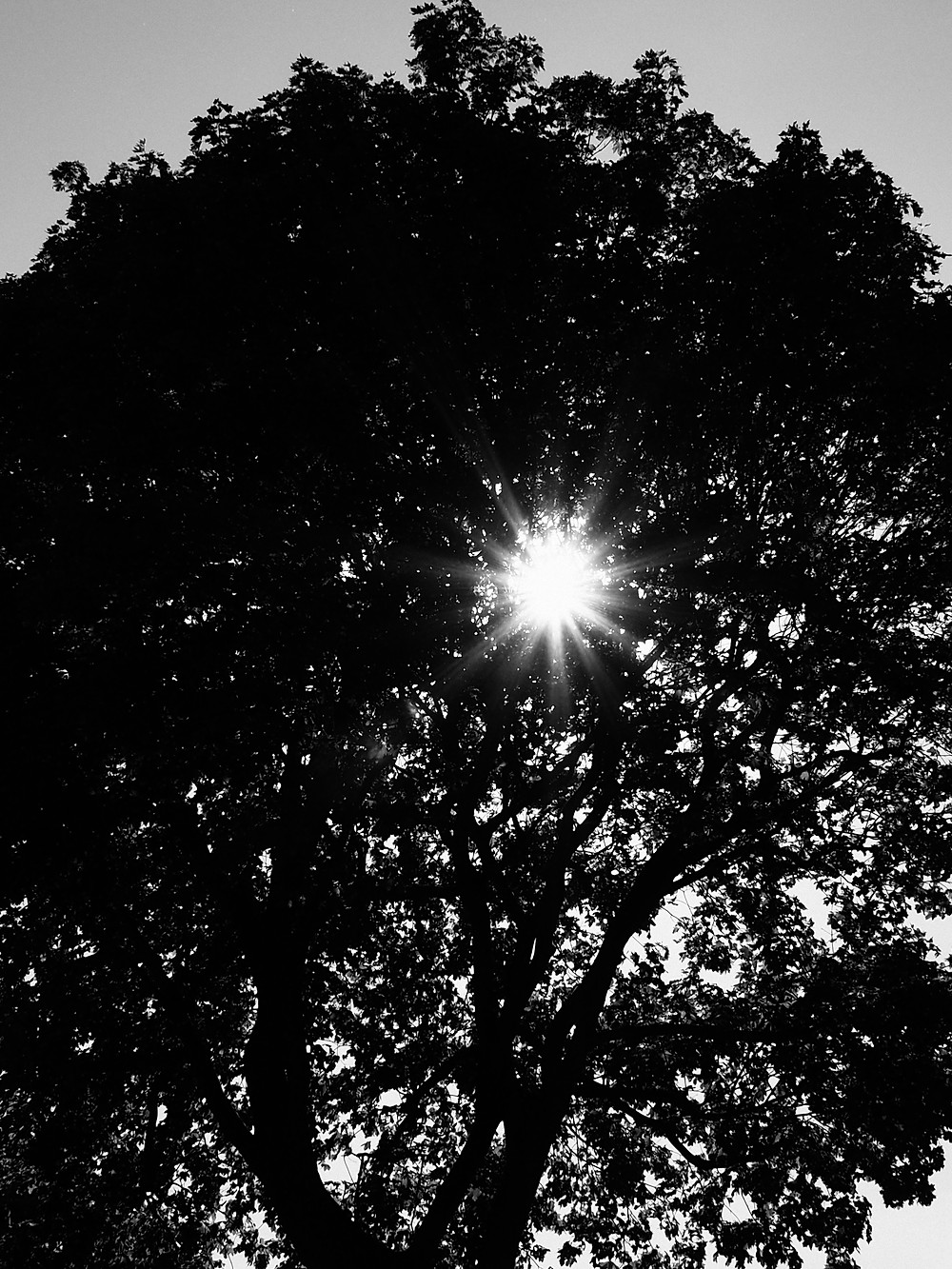 Eye of the Tree -  This was one of those moments when you're in the right place at the right time. I stopped down to f11 to get the starburst effect of the sun shining through the tree.