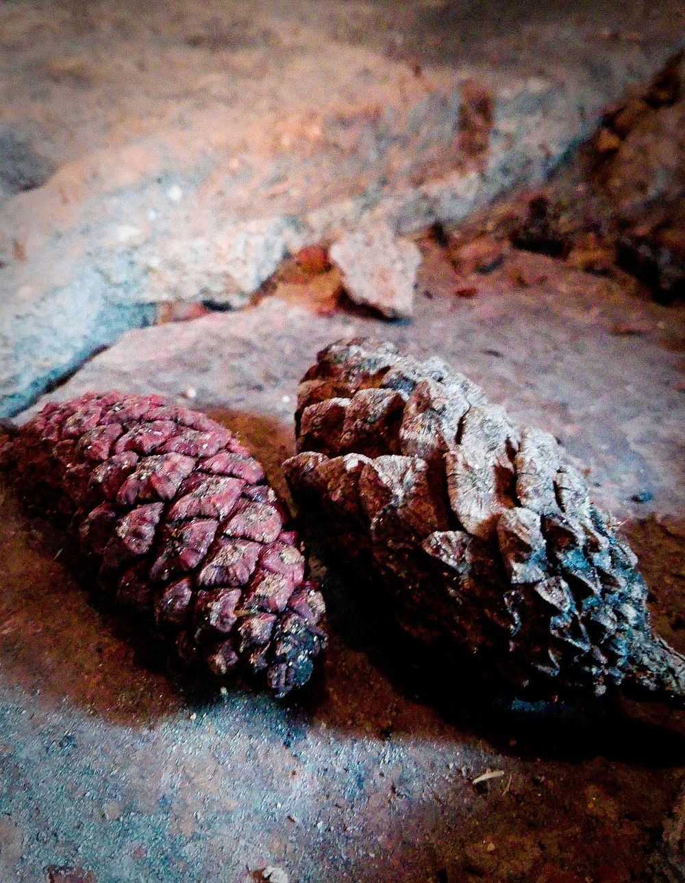 "CONES     I decided to take a trip to the mountain, in the ""Jalisco"" state, the town is called ""Mazamitla"", a wooded area in the middle of rivers and waterfalls. Unfortunately it  rained a lot so many photos there aren't, fortunately I like the rain and enjoy it in a cabin with a fireplace, I put these pine cones that I found."