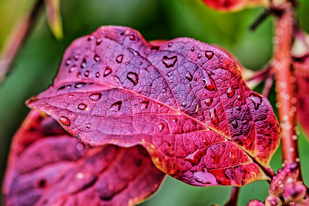 It is the photo of the autumn leaves in Siberia. I like autumn most of all as you have so many different colours of the nature - green, yellow, red, orange...  And raindrops on leaves are quire expressive and really nice to see.