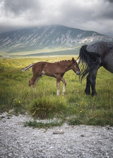 A.Passerini_Little Tibet (10)_e.jpg