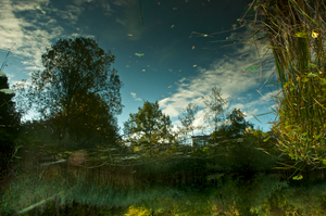 """Surreal Pond Dream is an inverted reflection of part of a pond. Things in the """"sky"""" are natural organic debris, floating on the surface of the pond.  I think this image looks like a pond in a dream: somewhat beautiful but a bit surreal. Also, it is interesting how, after inversion, the actual solid far-shore objects (at the bottom of the inverted photo) look as if they are water reflections. Location: The Nature Preserve in the Autal, a charming mini-valley that is part of the Village of Riehen BS Switzerland where I live."""
