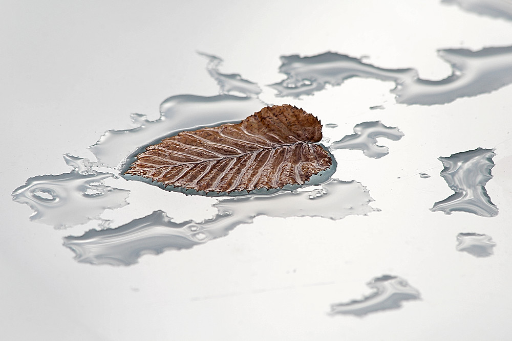 The leaf in that tiny puddle on my patio table caught my eye one afternoon in January. It had an unusual structure, and I liked how it seemed to float in the sky that was mirrored in the table's glass.