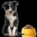 Kwaliteit hondenvoer