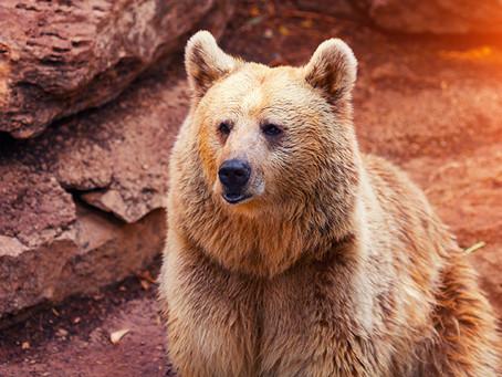 Banks and Bears