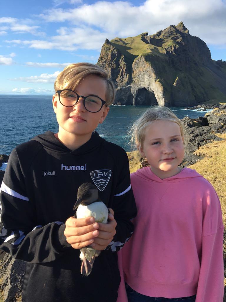 Vestman islands pufflings