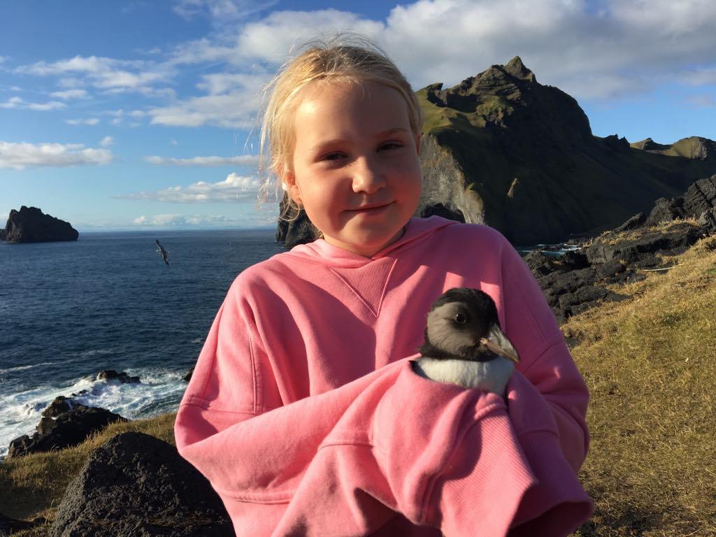 Pufflings rescue tour