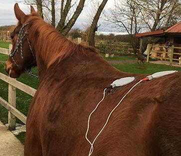 Kat Clarke Bristol Horse Physio