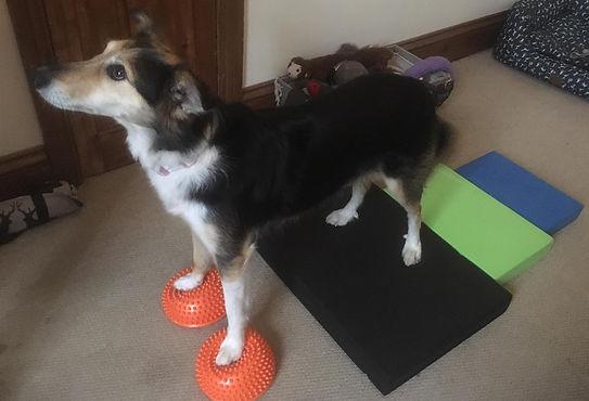 Kat Clarke Bristol Dog Physio
