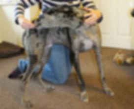 Dog Physio Bristol Kat Clarke