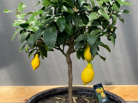 Outdoor Seating leads to Kitchen Inspiration: The Lemon tree at The Church Restaurant, Letterkenny
