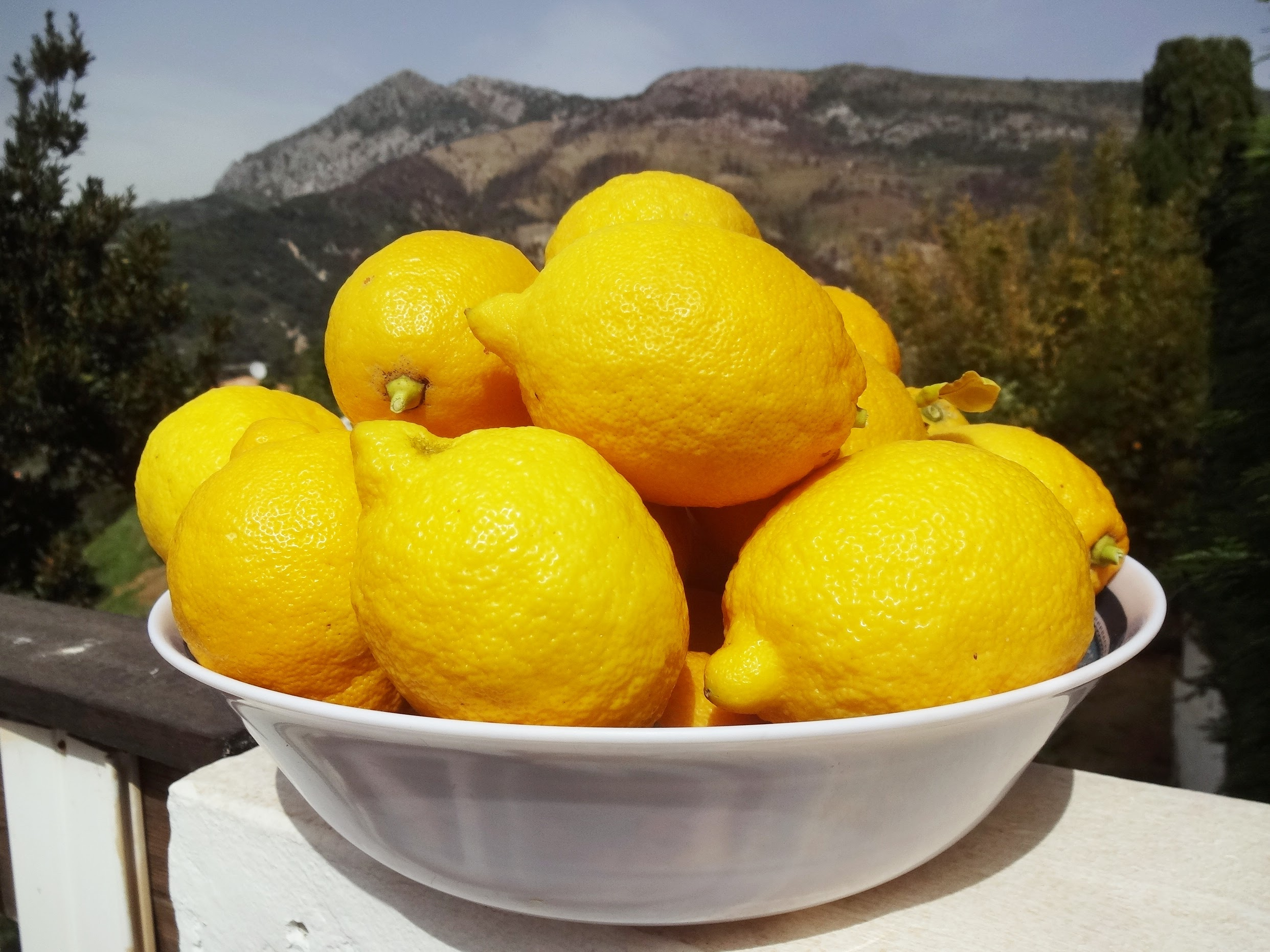 Lemons from our garden