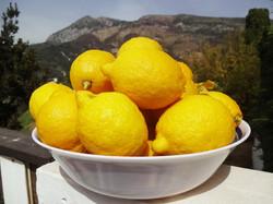 Lemons from our garden