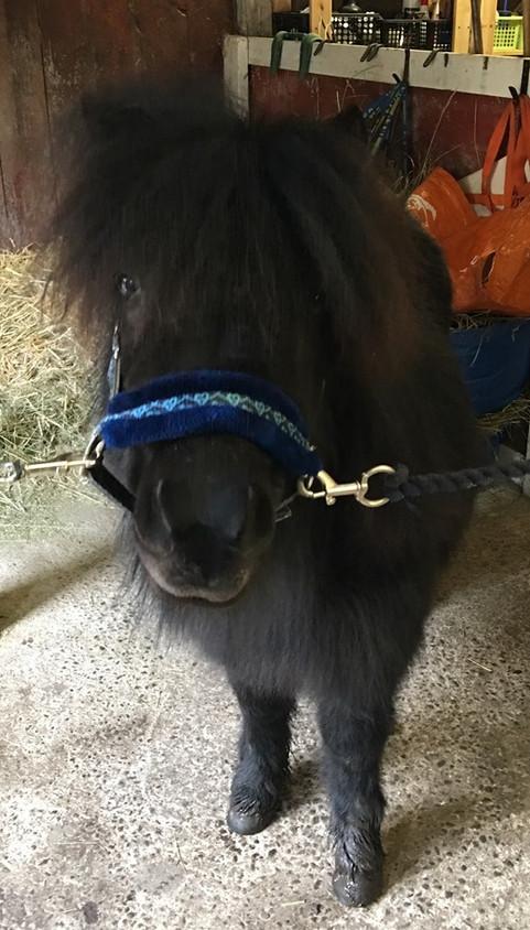 Ponny vandrarhem skara.jpg
