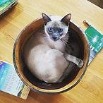 Silly cat.jpg