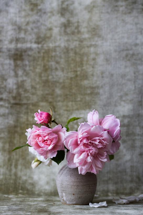 roses-828564_1920.jpg