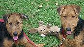 dog training manhattan, brooklyn, queens