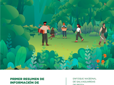 Argentina: well positioned to access results-based payments after completing the REDD+ readiness pha