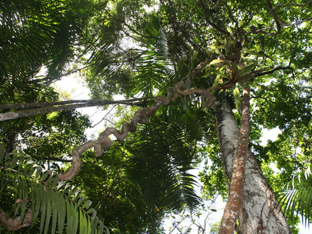 Forests: A natural solution to climate change, crucial for a sustainable future