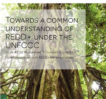 New Publication: Towards a Common Understanding of REDD+ under the UNFCCC