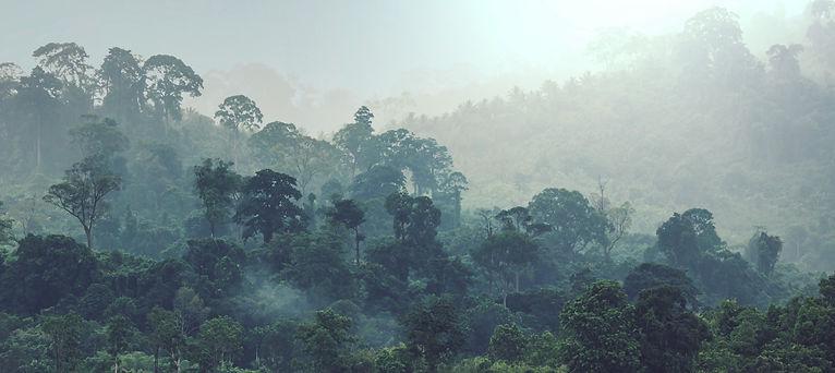 jungle-6RX66DT_edited.jpg