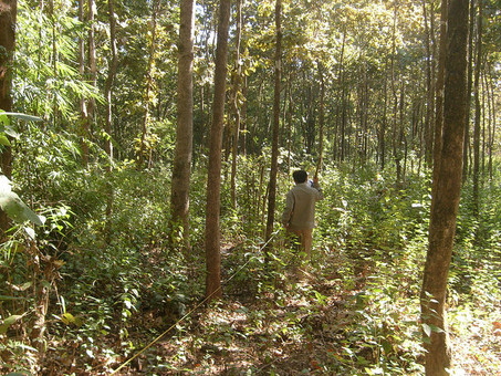 Banking on forests in Myanmar