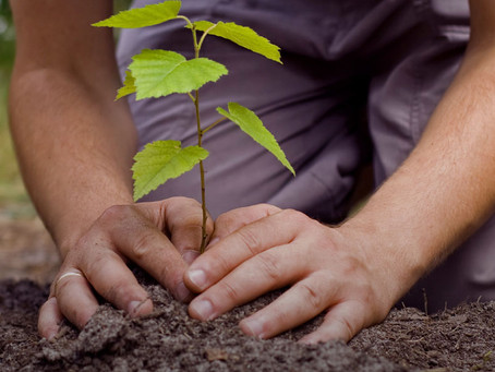 Plant a Tree to Mark April 22 Signing of the Paris Agreement. Join Earth Day Network's 'Trees fo