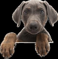 Dog Peep.png