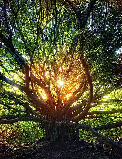 light through rounded tree.jpg