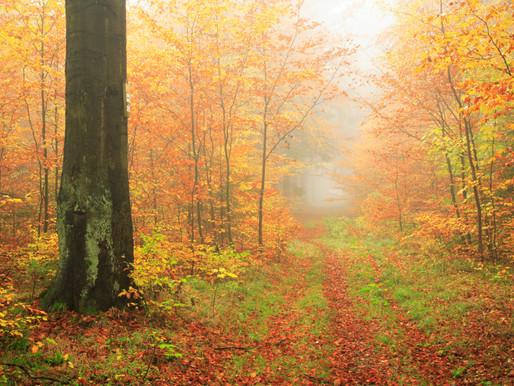 A Spiritual Practice for the Autumn Equinox