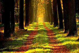 ersi_Path in forest_YkVkR2s.jpg