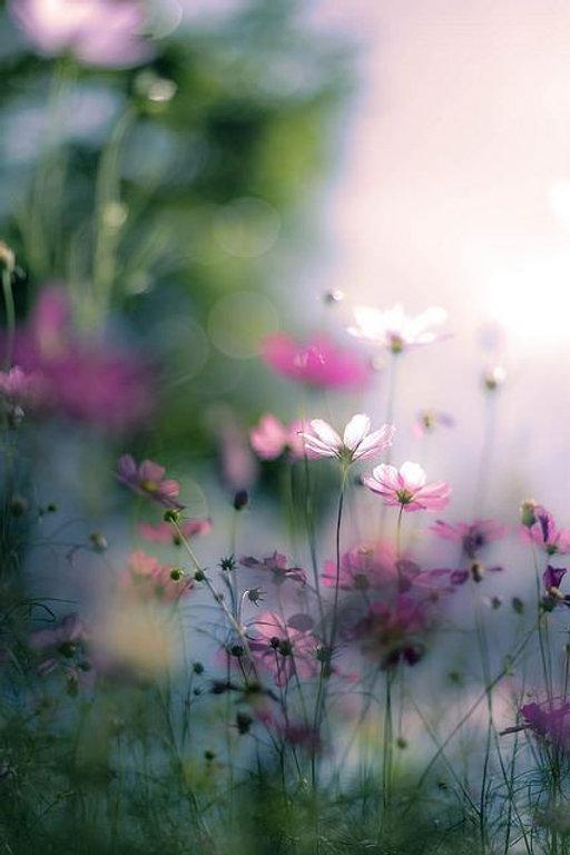 blurrypinkflowers.jpg