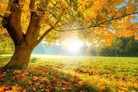 autumntreealmanack.jpg