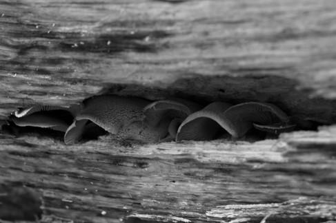 Mushrooms hiding amongst a fallen log