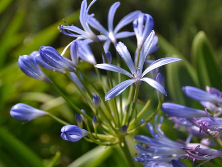 Porque se produce estrés en algunas de nuestras plantas y cómo podemos ayudarlas.