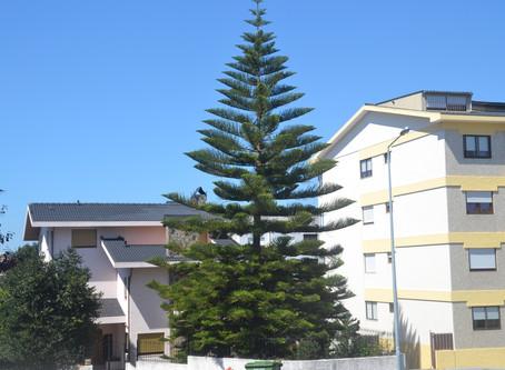 ¡Que podemos hacer para tener unos árboles sanos cómo si estuvieran en su entorno!