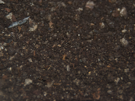 El suelo y su importancia para nuestras plantas.